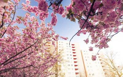 Vorschaubild für den Artikel 'Trockener April – Bäume brauchen Wasser'