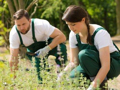 Bild zum Teaserartikel Gärtner*in im Garten- und Landschaftsbau
