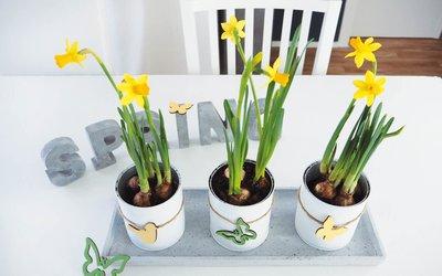 Vorschaubild für den Artikel 'Blumentöpfe aus leeren Konservendosen'